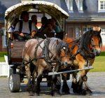Zwei Pferde ziehen eine Kutsche mit Menschen.
